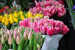 Tulip. Borough market Sunday flower market Stock Images