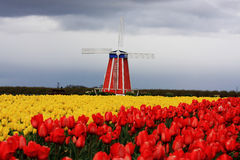 Tulip. Festival in woodburn oregon Royalty Free Stock Photo