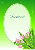 Tulip. Greeting card. Bouquet of the pink tulips Royalty Free Stock Image