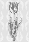Tulip, abstract vintage flower, black and white plant, monochrome. Hand-drawing, vector retro illustration Stock Photography