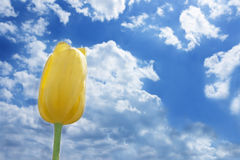 Tulip against cloudy sky Stock Photo