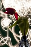 Tulip against light painting game stock photography