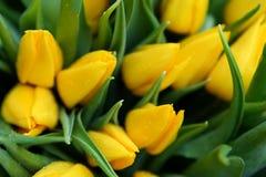 Tulip amarelo Foto de Stock