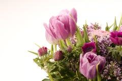 Tulip, Anemone, Lilac & Berries Stock Image