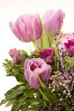 Tulip, Anemone, Lilac & Berries Stock Photo