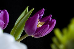 Tulip Arrangement Stock Photography