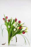 Tulip arrangement with slugs Royalty Free Stock Images
