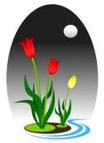 Tulip art royalty free illustration