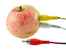 Tulip audio video wires plugs connected to apple Stock Image