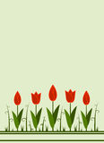 Tulip background Royalty Free Stock Image
