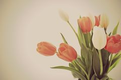 Tulip background flowers royalty free stock images