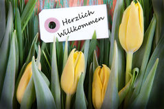 Tulip Background with Herzlich Willkommen Stock Photo