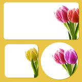 Tulip background templates Royalty Free Stock Photography