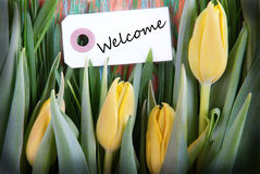 Tulip Background with Welcome Royalty Free Stock Image
