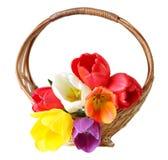 Tulip Basket Royalty Free Stock Images