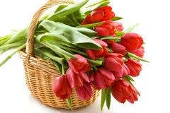 Tulip basket Stock Photos