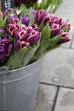 Tulip in basket Royalty Free Stock Images