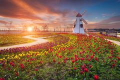 Tulip and beautiful landscape with sunrise