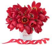 Tulip Beauty roja Imagen de archivo
