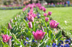 Tulip Bed. In the Smithsonian Castle Garden Stock Photo