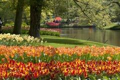 Tulip Beds Imagens de Stock