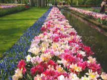 Tulip beds and pond Stock Image