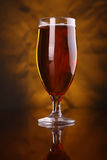 Tulip beer glass Stock Images