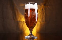 Tulip beer glass Stock Image