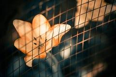 Tulip behind fence Royalty Free Stock Image