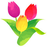 Tulip - birth flower vector illustration in watercolor paint  Royalty Free Stock Image