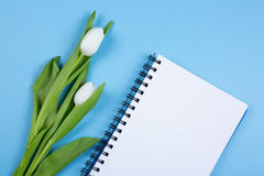 Tulip  and blank notebook Royalty Free Stock Photo