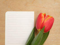 Tulip with blank paper note Stock Images