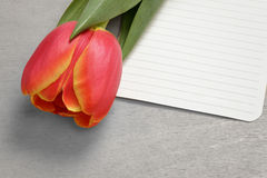Tulip with blank paper note Stock Photo