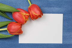 Tulip with blank paper note Stock Image