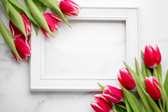 Tulip with blank picture frame Royalty Free Stock Photography