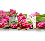 Tulip Bloom Mix Royalty Free Stock Images