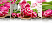 Tulip Bloom Mix Stock Photography