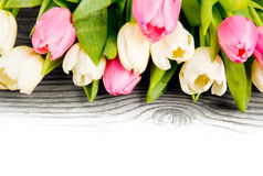 Tulip blooms Royalty Free Stock Photos