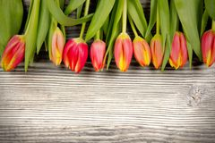 Tulip blooms. Photo of colorful tulip blooms on wooden desk stock photos