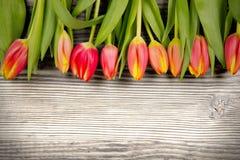 Tulip blooms Stock Photos