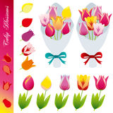 Tulip blossom icons set Stock Photos