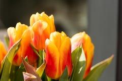 Tulip Blossoms anaranjada con verde se va en la alta resolución - macro Fotografía de archivo