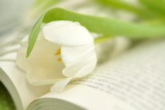 Tulip on a Book Royalty Free Stock Photo
