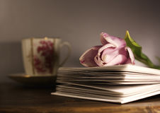 Tulip on book and cup Stock Photo