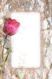 Tulip Border Royalty Free Stock Photography