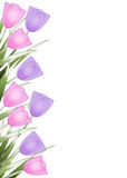 Tulip border Stock Photography