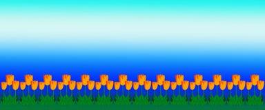 Tulip Border amarilla con el cielo azul brillante Imagenes de archivo