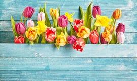 Tulip border with copy space stock photos