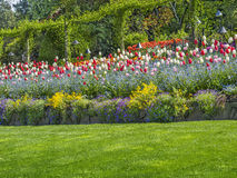 Tulip border Royalty Free Stock Photography