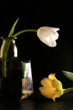 Tulip in a bottle Royalty Free Stock Images
